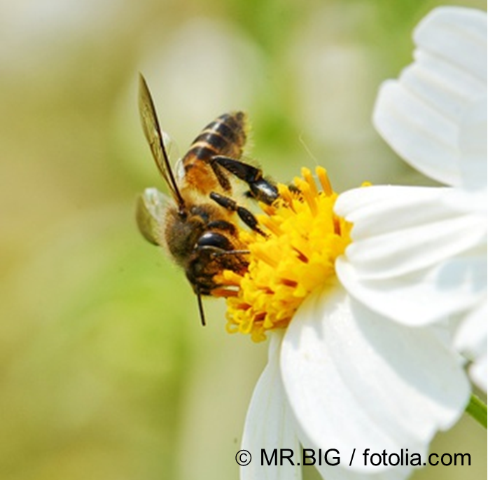 New DaNa article on pollinating insects